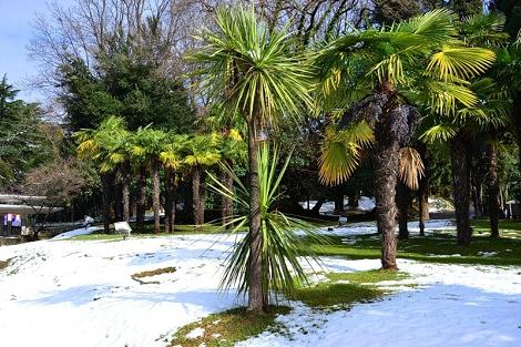 Абхазия в феврале отзывы